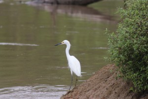Heron on the shore of the Amazon River