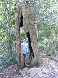 Old tree in Jamison Valley Australia