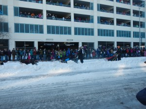 Iditarod Race Ceremonial Start 2014
